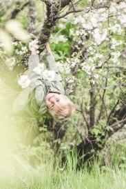 julius i trädet (1 av 1)